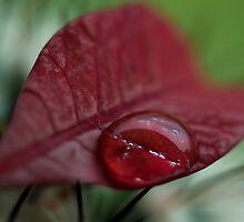 Wet Kiss by Jenni77