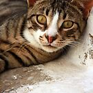 ... a particularly friendly Greek cat :) ... by BettinaSchwarz