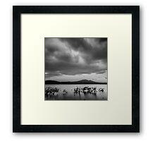 Mountain Lake Reeds II Framed Print
