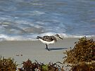 Sandpiper by Sandy Keeton