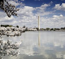 Cherry Blossoms; Washington D.C., Spring by Carol M.  Highsmith