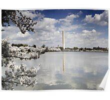 Cherry Blossoms; Washington D.C., Spring Poster