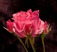 ROSE AMONG BUDS by Sandy Stewart