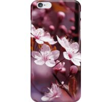 Sakura / Cherry Blossoms iPhone Case/Skin