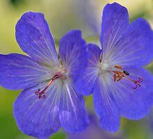 True Blue by Nancy Barrett