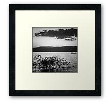 Mountain Lake Reeds IV Framed Print