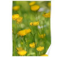 Field of Buttercups  Poster