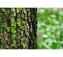 tree moss Photographic Print