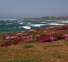 Windy Day, Fort Bragg by Patty Boyte