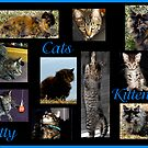 Cats, Kittens, Kitty by Jan  Tribe