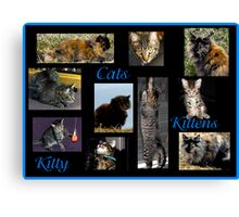 Cats, Kittens, Kitty Canvas Print