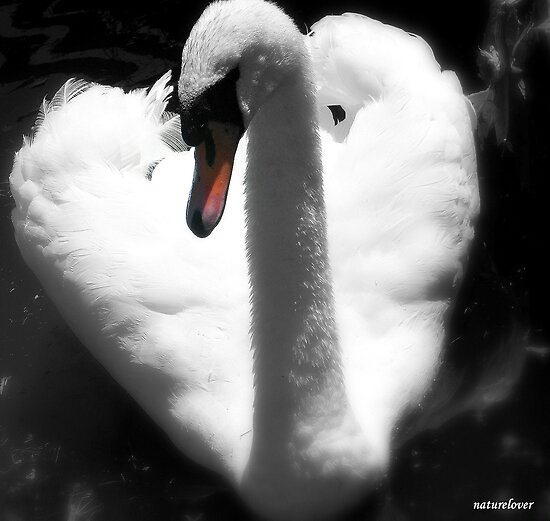 Here's My Heart! by naturelover