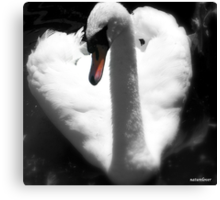 Here's My Heart! Canvas Print