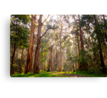 Light shining through the trees at Olinda Falls Canvas Print
