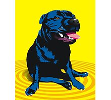 staffy / PBT Photographic Print