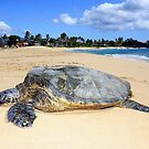 Turtle in Paradise by ManaPhoto