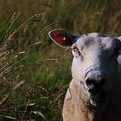 Sheep by Rowan  Lewgalon