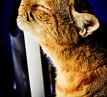 Cat dreams by Pat Shawyer