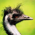 ostrich by memb