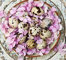 Quail eggs by Ilva Beretta