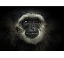 Silvery Gibbon Photographic Print