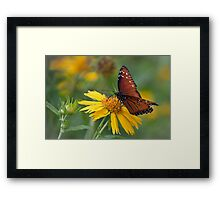Monarch butterfly in Guadalupe State Park Framed Print