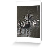 Black swans, grey cygnets Greeting Card