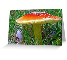*Amanita muscaria* Greeting Card
