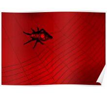 Red & Black Spider 2 Poster
