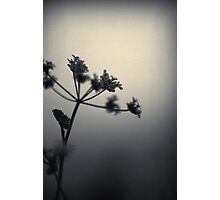 desolate. Photographic Print