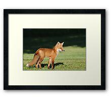 Foxy Lady  Framed Print