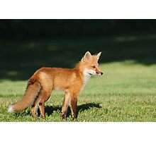 Foxy Lady  Photographic Print