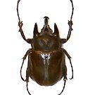 Bug 01 by Ronald Eller