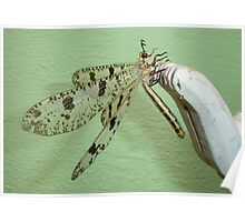 Antlion Wings Poster