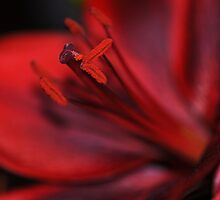 Red Passion by Rosy Kueng