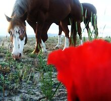 Horse and Flower by Mirafaye