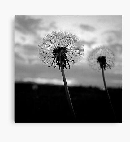 I Wish..... Canvas Print
