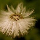 Dandelion Seeds by Fern Design
