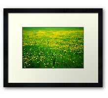 Field of Dandelions Framed Print
