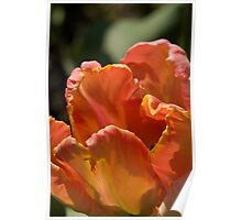 Parrot Tulip Poster