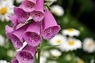 Spring Flowers by Barbara Burkhardt