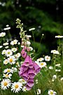 Spring Time Wild Flowers - Washington State by Barbara Burkhardt