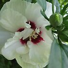 White Flower by Gibbsy