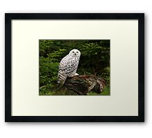 The Snowy Owl Framed Print