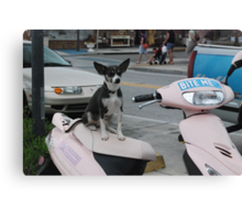 Puppy Moped  Canvas Print