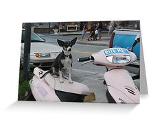 Puppy Moped  Greeting Card