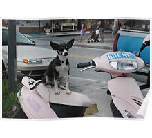 Puppy Moped  Poster