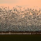 Geese Paradise by Olga Zvereva