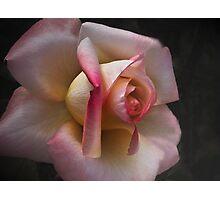 Soft Rose . . . Photographic Print