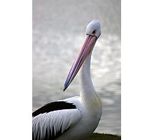 Blue Steel Pelican Style Photographic Print